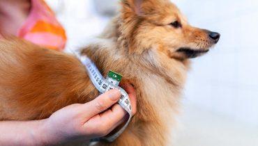 Guida alla misurazione del cane
