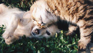 Guida pratica alla convivenza tra cane e gatto