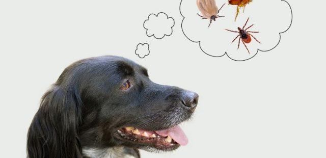 Parassiti e prevenzione: come proteggere il cane dalle zecche