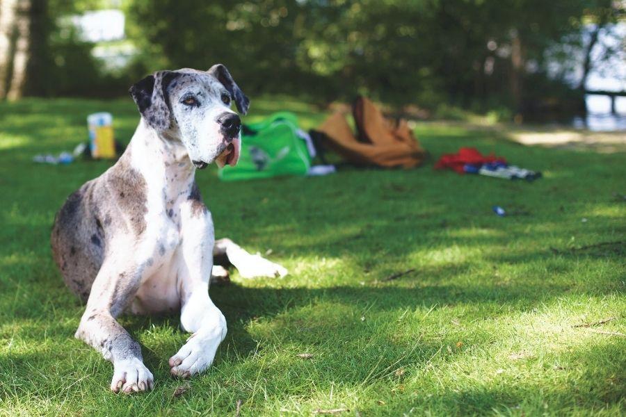 Guinzagli e collari per cani di taglia grande: guida all'acquisto