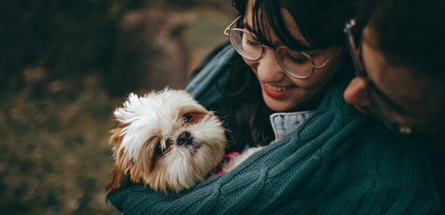 Accessori per cani di taglia piccola e toy: guida all'acquisto