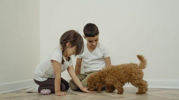 Educazione del cane: l'importantissimo ruolo del rinforzo positivo