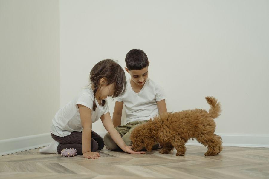 L'educazione del cane: il ruolo importantissimo del rinforzo positivo