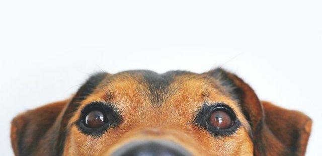 Contatto visivo con il cane: perché è così importante e come imparare a gestirlo